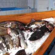 Cel mai bun loc de peşte!