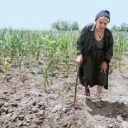 Avem deficite de umiditate în sol, în Dobrogea, Moldova, Muntenia, Oltenia şi Banat
