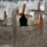 NEAMŢUL, ÎN TRISTUL AN AL MORŢII. CE TRAGEDII AU MARCAT JUDEŢUL ÎN ACEST AN