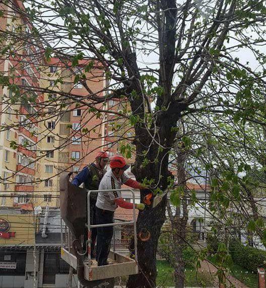 Arsene, despre revoluţia ecologică a Primăriei: Platanii sunt cei mai mari agresori respiratori!