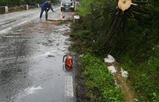 Arbore prăbuşit la Poiana Largului