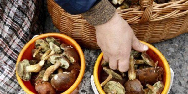 Cinci oameni au ajuns la urgenţă intoxicaţi cu ciuperci