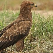 Două specii rare, de neatins în Europa, protejate în Neamţ