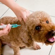 Piatra Neamţ: vaccinare antirabică gratuită
