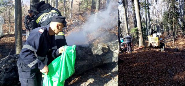 Foc teribil în pădurea Mănăstirii Neamţ