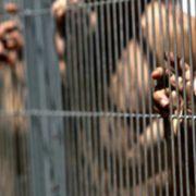 Scandal la Bodeşti, 5 oameni în arest