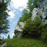"""""""Asigurarea unui management integrat, conservativ și durabil al ariilor naturale protejate administrate de Județul Neamț"""""""