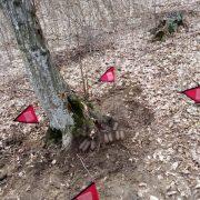 Neamţ: Muniţie din al doilea război mondial, descoperită în pădurea Arinosu