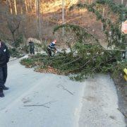 Vânt puternic în Neamţ:  au fost avariate reţelele de energie în 6 localităţi; arbori căzuţi pe carsosabil, acoperişuri desprinse