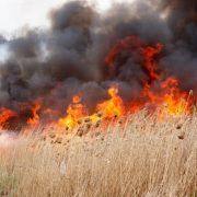 Incendiul de la Izvorul Muntelui ameninţă pădurea. Zece hectare în flăcări! Direcţia Silvică a trimis ajutoare