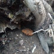 Muniţie neexplodată, găsită de copii în pădurea Sâga