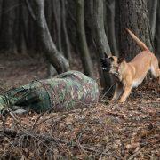 Plan Roşu de intervenţie la Bicaz, raport final•Se recomandă utilizarea câinilor în căutare-salvare în mediu natural