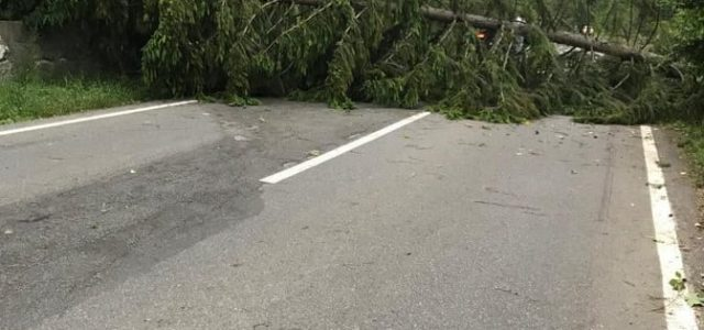 Furtună în Neamţ: peste 6000 de oameni fără curent electric, copaci şi stâlpi la pământ