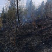 Încă mai sunt focare în incendiul de la Sabasa. Mobilizare masivă de forţe pentru salvarea pădurii