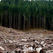Senatoarea Emilia Arcan: Am votat pentru DNA-ul pădurilor!Stop despăduririi României!