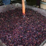 ISU Neamţ, atenţionări la fermentatul mustului