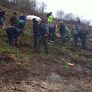Un milion și jumătate de arbori tineri în pădurile Neamțului