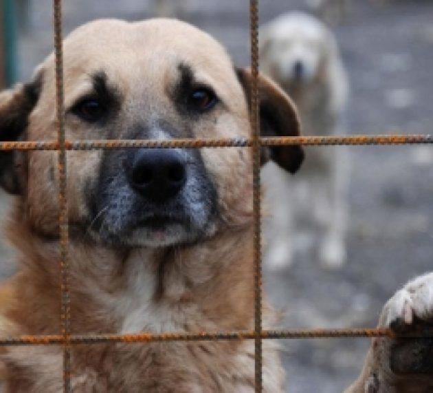 Piatra Neamţ: 579 câini comunitari adoptați și 536 de sterilizări efectuate în 2018