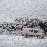 Aversă de ninsoare în această dimineaţă la Piatra Neamţ