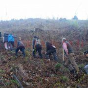 Neamţ: Peste un milion de puieţi vor fi plantaţi până pe 15 aprilie