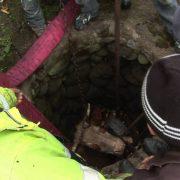 Pompierii nemţeni au scos o vacă dintr-o fântână de 15 metri