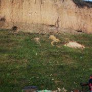 Neamţ: O căruţă cu patru oameni şi doi cai s-a prăbuşit într-o prăpastie