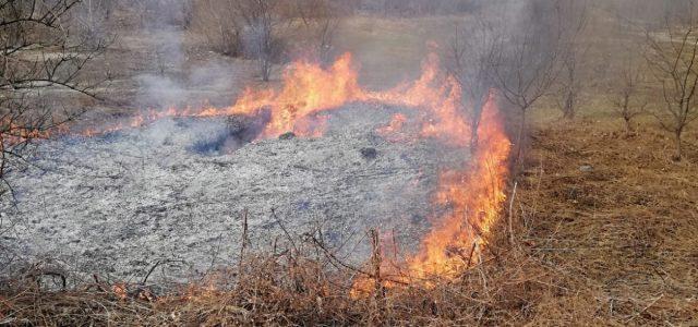 Neamţ: amenzi drastice pentru arderea necontrolată a miriştilor; pompierii, chemaţi la mai multe incendii de vegetaţie