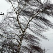 Vânt puternic la Piatra Neamţ; avertizare meteo