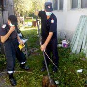 Neamţ: Căţel salvat de pompieri dintr-o toaletă