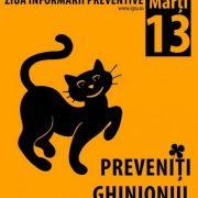 ISU Neamţ: Fără ghinion în ziua de marţi, 13, cu pisica neagră